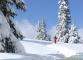 Sapins sous la neige (12 mars 2006)