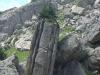 Sapin sur le rocher