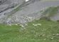 Moutons dans les alpages