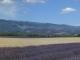 Magnifique vue sur le plateau de Valensole (5 juillet 2005)